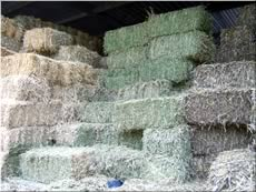 Lucerne Hay from Sun Valley Produce, Blue Mountains & Penrith.